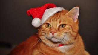 Ветеринари съветват да не обличаме котките си със смешни костюми по празниците