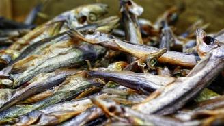 Ограничава се риболовът в Черно море