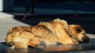 Бездомни кучета тормозят жителите на Исперих