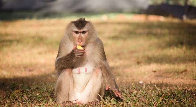 Маймуни разопаковаха подаръци в зоопарк в Германия