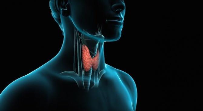 Безплатни изследвания на щитовидна жлеза в УМБАЛ Бургас