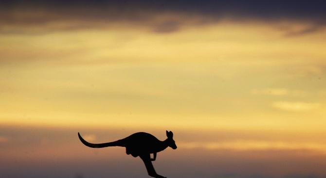 Моркови полетяха от хеликоптери, за да нахранят бедстващите животни в Австралия