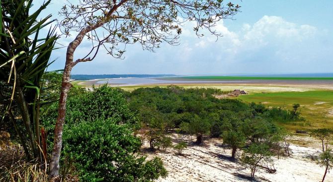 Обезлесяването в бразилската част на Амазония се е увеличило с 85 процента през 2019 г.