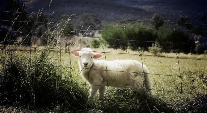 Отпускат средства за борба с последиците от болестите по животните