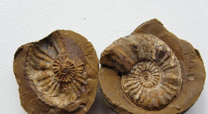 Неандерталците са се гмуркали за миди от морското дъно
