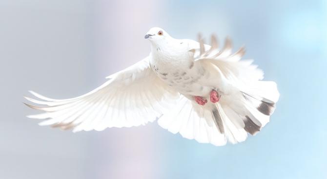 Робот лети с пера на гълъб