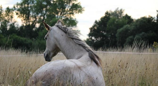 Мъж преби паднал кон с железен прът в Благоевград