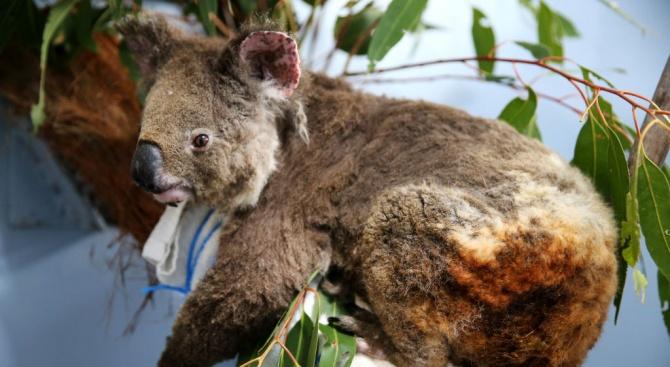 След години ще стане ясно колко видове са напълно изчезнали в Австралия