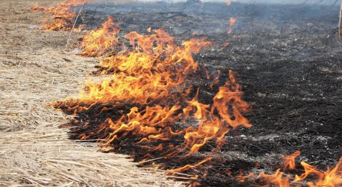 Кой е виновен за пожара в Драгоманското блато?