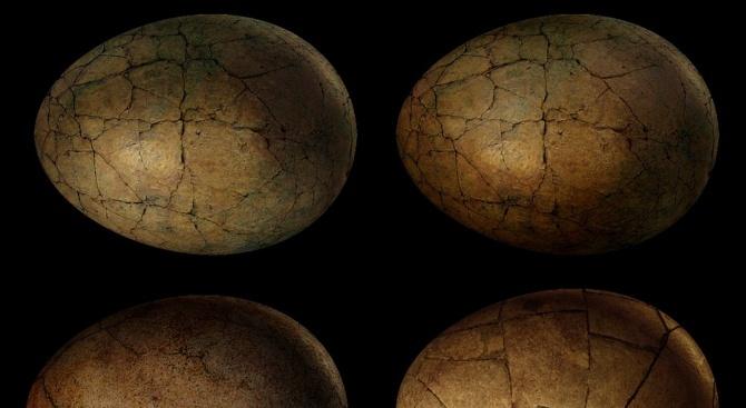Откриха три добре запазени динозавърски яйца в Китай