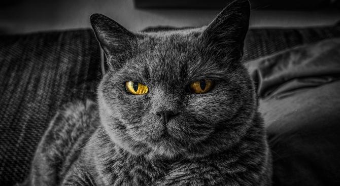 Най-лошата котка в света си търси дом