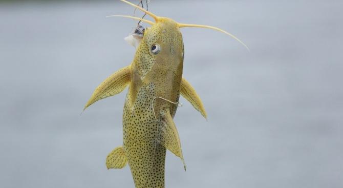 Мъртва риба изплува от река Марица