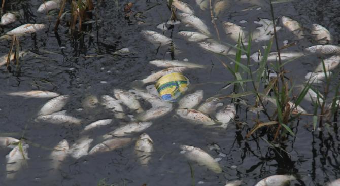 Разследват мъртвата риба в река Марица