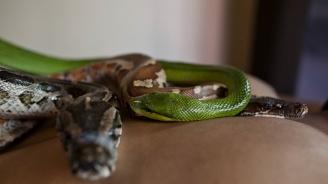Китайският вирус е плъзнал от змия
