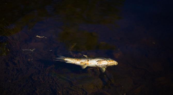 Излизат първите резултати от замърсяването на река Марица