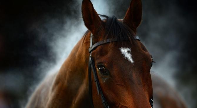 Елитни коне изгоряха при пожар във Врачанско
