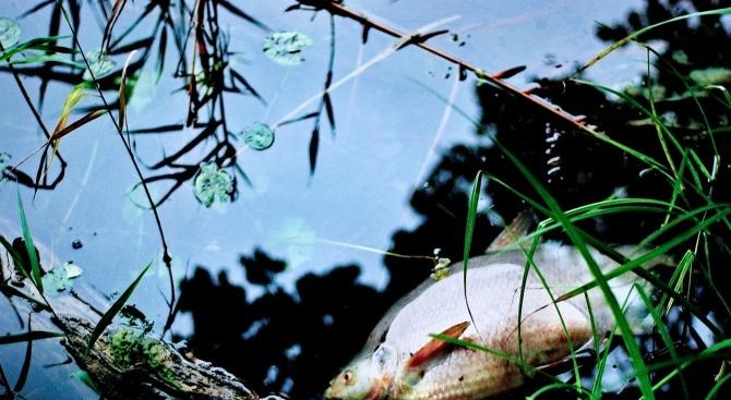 Нищят сигнал за мъртва риба в река Чепеларска