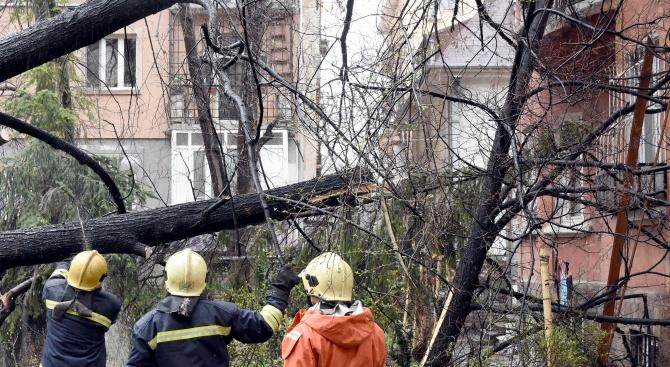 Силният вятър изпочупи клони в София