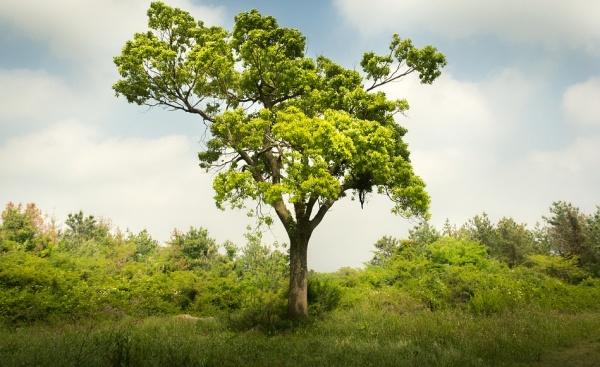 Засаждали ли сте някога дърво?