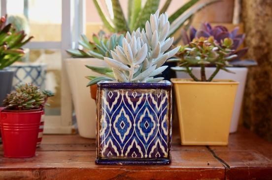 Отглеждате ли растения в саксии удома си?