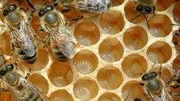 Заради зимата пчелите умират, цената на меда расте