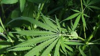 ЕС: Рекорден брой нови наркотични вещества