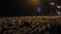 1000 овце нахлуха в испански град, овчарят заспал
