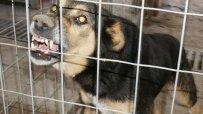 Жена беше жестоко нахапана от улично куче в София