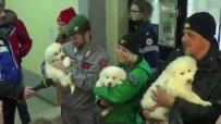 Три кученца са спасени от затрупания хотел в Италия