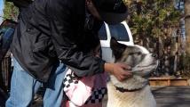 Куче се върна в изпепеления Парадайс 101 дни след пожара