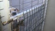 Ето какво е състоянието на спасените от кучешки боеве питбули