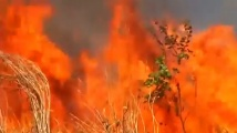 Бразилският президент: Еколози подпалиха горите ни