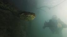 Гмуркачи се натъкнаха на чудовищна анаконда край водите на Бразилия