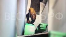 Руснак взриви банкомат и загина