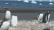 Българската антарктическа експедиция пристигна на остров Ливингстън
