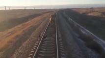 Камила забави влак